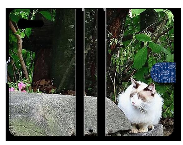 ペットの写真作品事例